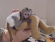 cute monkeys for adoption